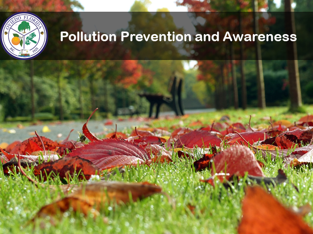 Pollution Prevention and Awareness picture showing fall leaves on the ground